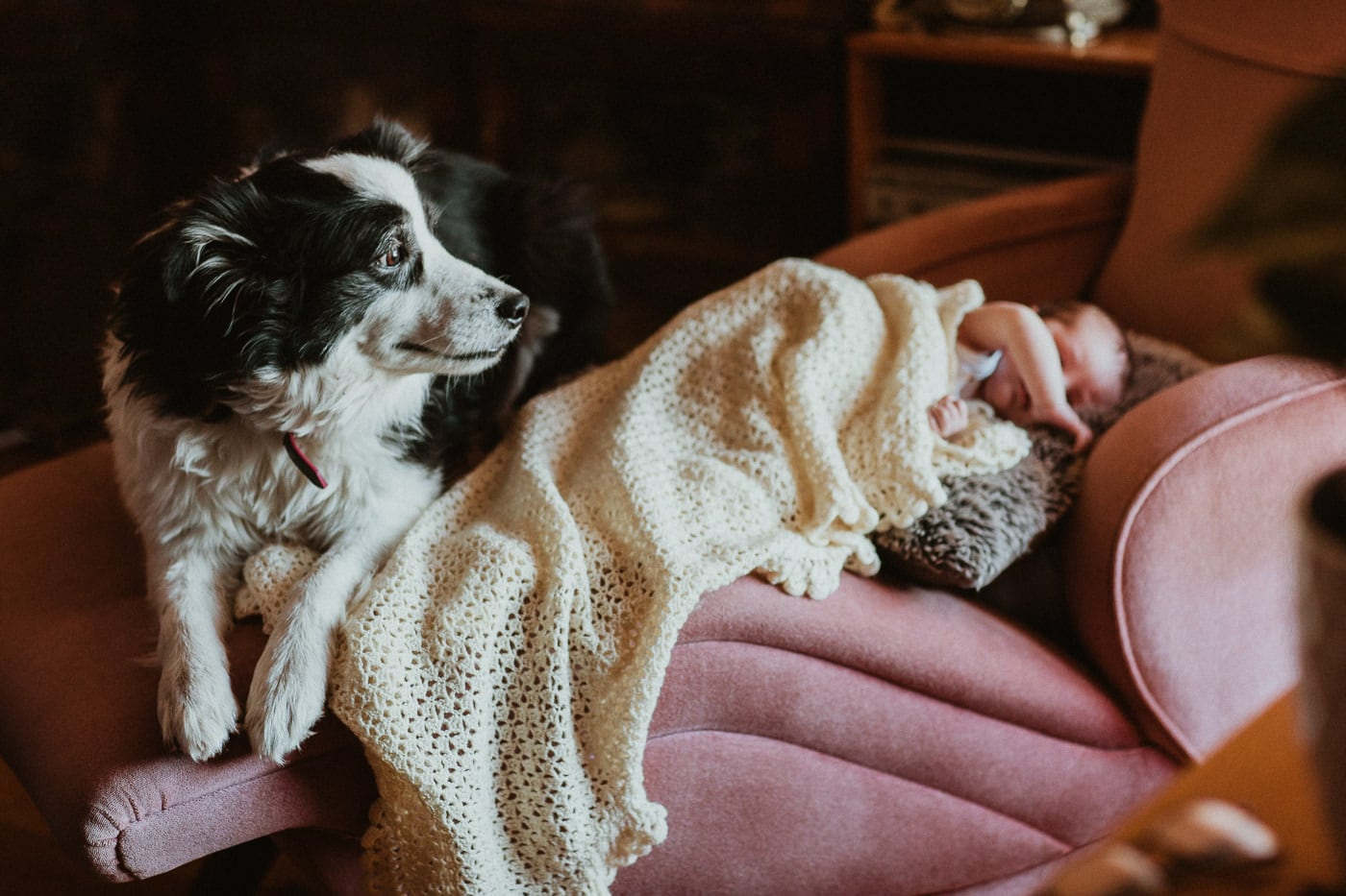 dog watching over baby - photo in melbourne
