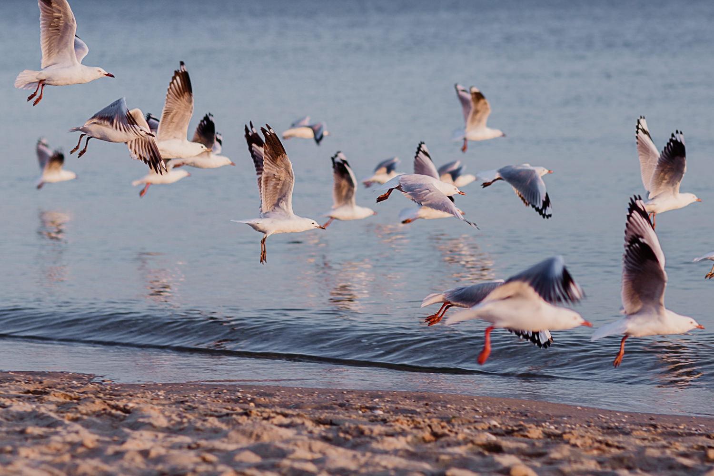 seagulls in Port Melbourne - Photographer in Port Melbourne